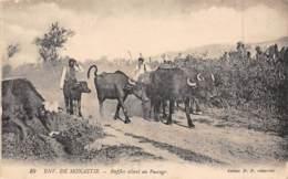 Env. De MONASTIR - Buffles Allant Au Paccage - Tunisie