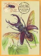 2019 Moldova Moldavie Red Book.  Maxicard. Stag Beetle (Lucanus Cervus) - Insectes