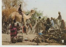 C.P. - PHOTO - RÉPUBLIQUE DU TCHAD - PRÉFECTURE DU CHARI BAGUIRMI - SUR LA ROUTE DE TOURBA - INTENSES ACTIVITÉS AUTOUR - Chad