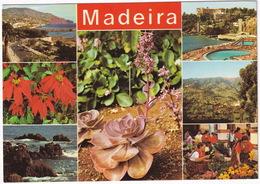 Madeira - Multiview - Plants, Flowers Etc. - Madeira