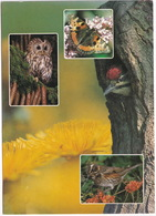 De Kempen - ATALANTA VLINDER, Bosuil, Specht - (Holland) - Butterfly / Schmetterling / Papillon - Vlinders