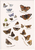 Natuur - (Marjolein Bastin) - (Holland) - Vlinder / Butterfly / Schmetterling / Papillon - Vlinders