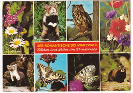 Schwarzwald: SCHWALBENSCHWANZ, APOLLO - (Deutschland) - Vlinder / Butterfly / Schmetterling / Papillon - Vlinders