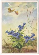 Deutschland - Vlinder / Butterfly / Schmetterling / Papillon - (1954) - Vlinders