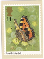 Butterflies: SMALL TORTOISESHELL  - Vlinder / Butterfly / Schmetterling / Papillon - (United Kingdom)  - 14P - Vlinders