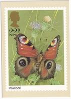 Butterflies: PEACOCK  - Vlinder / Butterfly / Schmetterling / Papillon - (United Kingdom)  - 22P - Vlinders