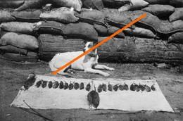 Ww1 Les Animaux Dans La Rande Guerre - 1914-18