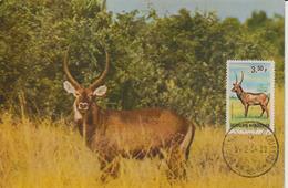 Burundi Carte Maximum Animaux 1964 Kobus 85 - Autres