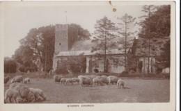 AR23 Sturry Church - Grazing Sheep, RPPC, Local Publisher - England