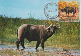 Burundi Carte Maximum Animaux 1971 Buffle 435 - Burundi