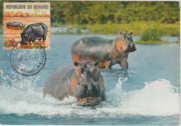 Burundi Carte Maximum Animaux 1971 Hippopotame 436 - Autres