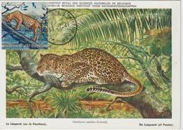 Burundi Carte Maximum Animaux 1971 Panthère 441 - Autres