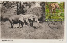 Burundi Carte Maximum Animaux 1971 Eléphant 447 - Burundi