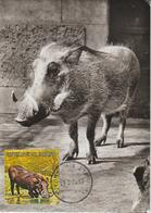 Burundi Carte Maximum Animaux 1971 Phacochère 452 - Autres