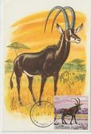 Burundi Carte Maximum Animaux 1971 Antilope 454 - Burundi