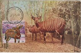 Burundi Carte Maximum Animaux 1971 Bongo 457 - Autres