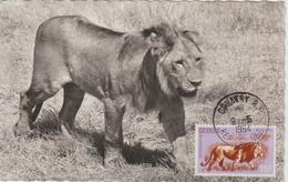 Guinée Carte Maximum Animaux 1962 Lion 109 - Guinée (1958-...)