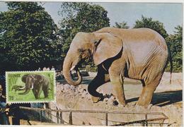 Guinée Carte Maximum Animaux 1964 Eléphant 205 - Guinée (1958-...)