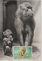 Guinée Carte Maximum Animaux 1968 Singe 363 - Guinée (1958-...)