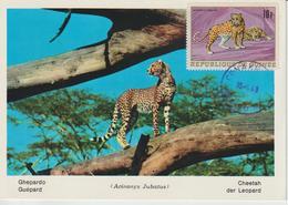 Guinée Carte Maximum Animaux 1968 Guépard 364 - Guinée (1958-...)