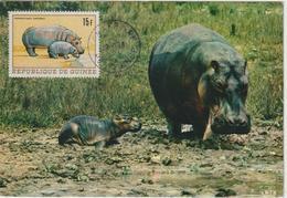 Guinée Carte Maximum Animaux 1968 Hippopotame 365 - Guinée (1958-...)