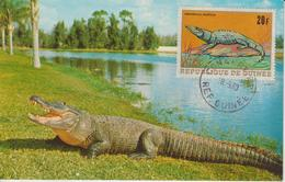 Guinée Carte Maximum Animaux 1968 Crocodile 366 - Guinée (1958-...)