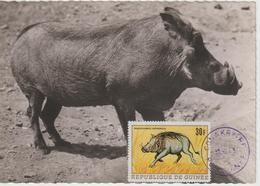Guinée Carte Maximum Animaux 1968 Phacochère 367 - Guinée (1958-...)