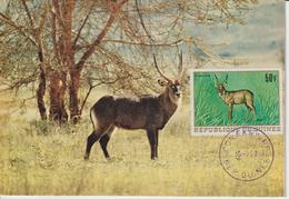 Guinée Carte Maximum Animaux 1968 Kobus 368 - Guinée (1958-...)