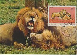 Guinée Carte Maximum Animaux 1968 Lions PA 86 - Guinée (1958-...)