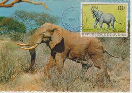 Guinée Carte Maximum Animaux 1968 Eléphant PA 87 - Guinée (1958-...)