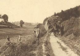 +++ CPA - HOUFFALIZE - Route De Taverneux - Attelage Agricole - Travail Au Champ - Nels    // - Houffalize