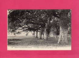 80 Somme, SAINT-VALERY-SUR-SOMME, Les Chênes Séculaires Du Cap Hornu, (L. L.) - Saint Valery Sur Somme