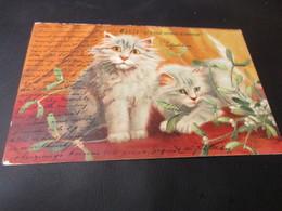 Fantasiekaart Katten - Gatti