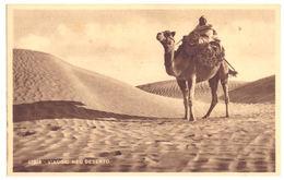 LIBIA - VIAGGIO NEL DESERTO --- E0688 - Libia