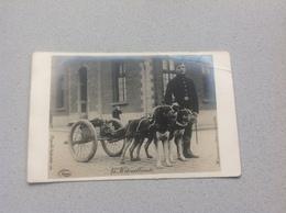 Photo Carte Attelage Chien Mitrailleuse Militaire Militaria - Cartes Postales