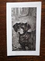 L19/223 Chien Quêteur - Dogs