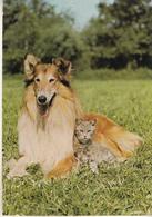 Lassie - Chiens