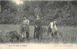 -dpts Div. -ref-AH606-  Landes - Récolte Du Millet Dans Les Landes - Agriculture - Carte Bon Etat - - Non Classés