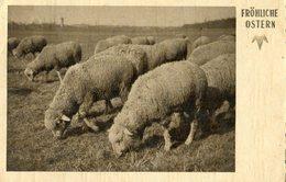 SWITZERLAND Postcard 1935 With Sheep.BARGAIN.!! - Dieren
