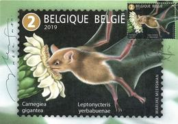 Belgium 2019 CM MC Maximum Card, Animals, Pollinators, Lesser Long-nosed Bat (Leptonycteris Yerbabuenae), Saguaro Cactus - Bats