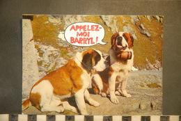 CP,  Chiens, Appelez Moi Barryl, Saint Bernard Avec Fut De Rhum, Barils  Humour, - Chiens