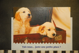 CP,  Chiots, Labrador, Dans Une Malle, Fais Nous...juste Une Petite Place,   Humour, - Chiens