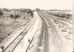 Photo - Gare De Chalindrey - Haute Marne    En 1963 - Gare -  Train - Chemin De Fer - Trains