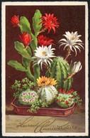 C1520 - Glückwunschkarte Blumen - Kaktus Kakteen - Blumen