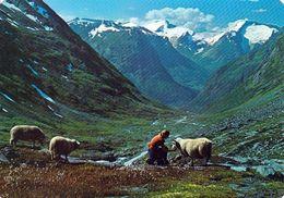 1 AK Norwegen * Landschaft In Der Norwegischen Kommune Stryn * - Norwegen