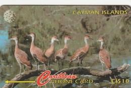 Cayman Islands - Whistling Duck - 13CCIA - Kaimaninseln (Cayman I.)