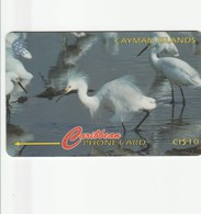 Cayman Islands - Snowy Egret - 13CCIC - Iles Cayman