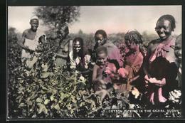 CPA Gezira, Cotton Picking, Afrikanische Baumwollpflückerinnen - Flores, Plantas & Arboles