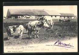 AK Chalet Des Preisettes Au Chasseron, Rinder - Vaches
