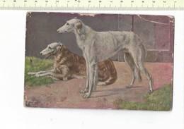 DIEREN 310 - CHIEN - HOND - Hunde